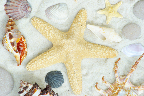 Image of starfish and other marine life, implying diversity